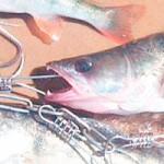 Рыбалка на Вилейском водохранилище ЛЕТОМ