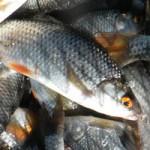 Рыбалка на Вилейском водохранилище ВЕСНОЙ