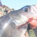 Рыбалка на Припяти ВЕСНОЙ