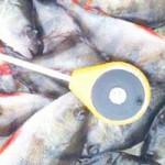 Рыбалка на Припяти ЗИМОЙ