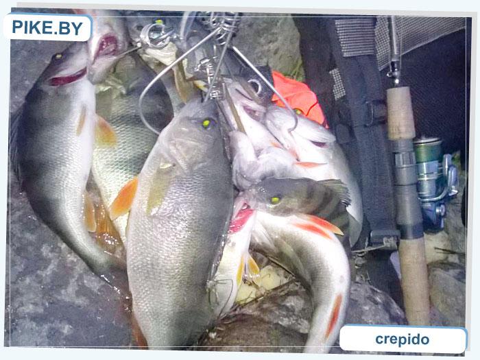 Рыбалка на Западной Двине ОСЕНЬЮ