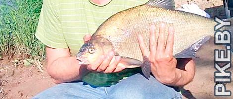 Рыбалка на Западной Двине ВЕСНОЙ