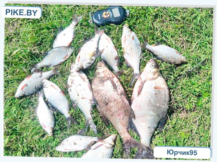 Рыбалка на Днепре ЛЕТОМ