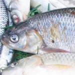 Рыбалка на Днепре ВЕСНОЙ