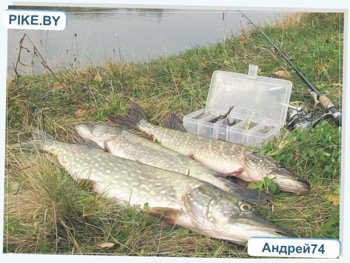 Рыбалка на Восточной Березине ОСЕНЬЮ