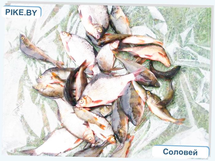 Рыбалка на Восточной Березине ВЕСНОЙ