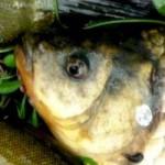 Рыбалка на Заславском водохранилище ЛЕТОМ