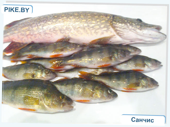 Рыбалка на Заславском водохранилище ОСЕНЬЮ