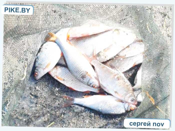 Рыбалка на Заславском водохранилище ВЕСНОЙ