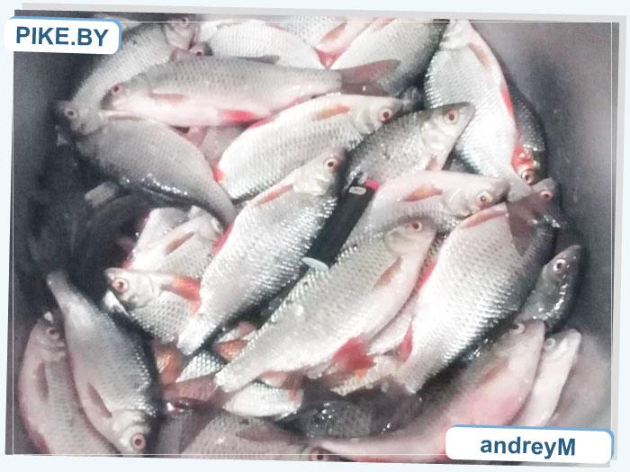 Рыбалка на Заславском водохранилище ЗИМОЙ