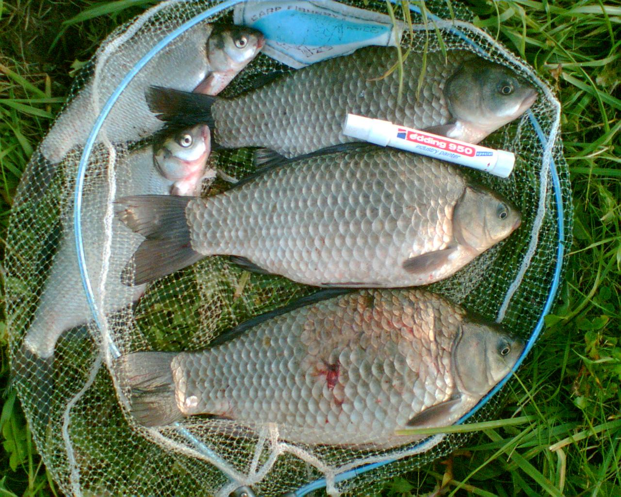 Просто несколько моих фото со старых рыбалок