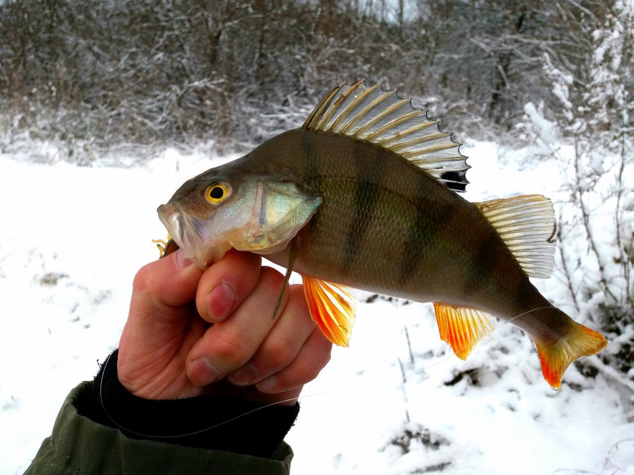 Было решено, что понедельник посвящу рыбалке