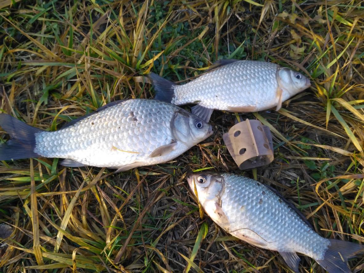 После двух пробных выездов сегодня состоялась уже «осознанная» рыбалка