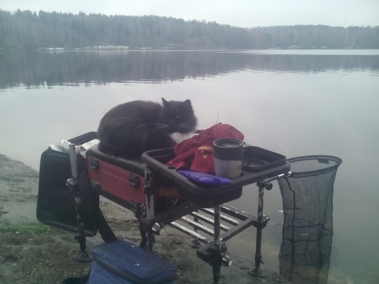 В субботу посетил водоём в районе пильницы на дамбе