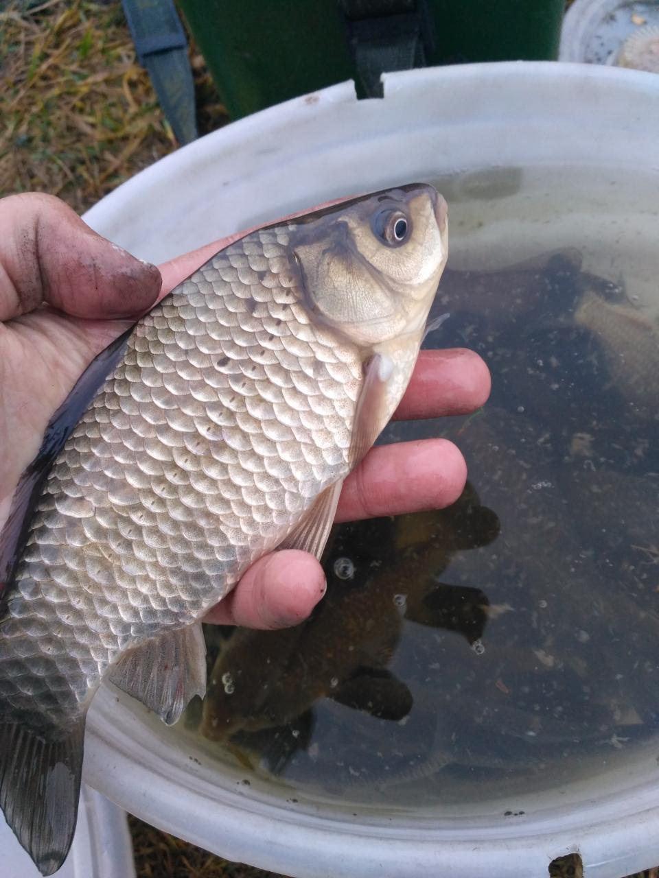 На дворе плюс , а это значит  ... | Отчеты о рыбалке в Беларуси