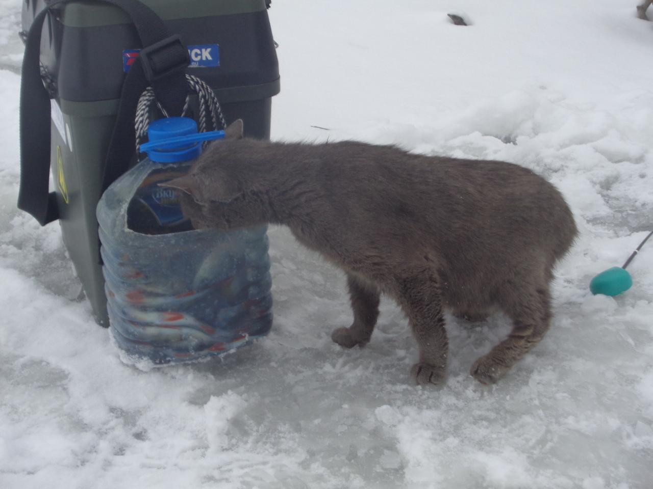 Сегодня поехали на Чики. Ловил в основном возле ... | Отчеты о рыбалке в Беларуси