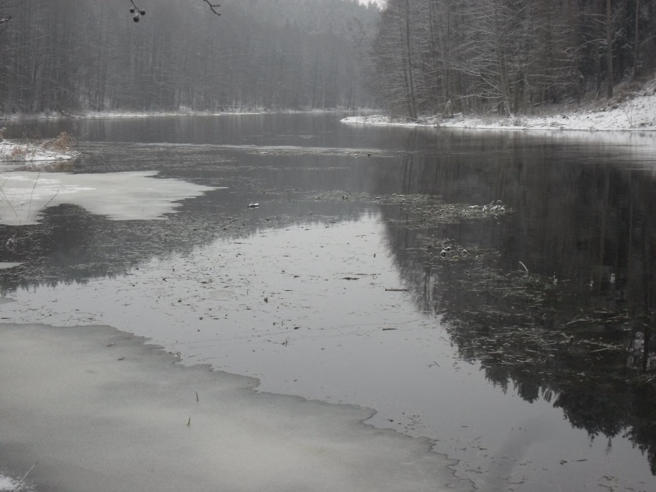 С лета присмотрел старицу и сегодня решил сьездить ... | Отчеты о рыбалке в Беларуси