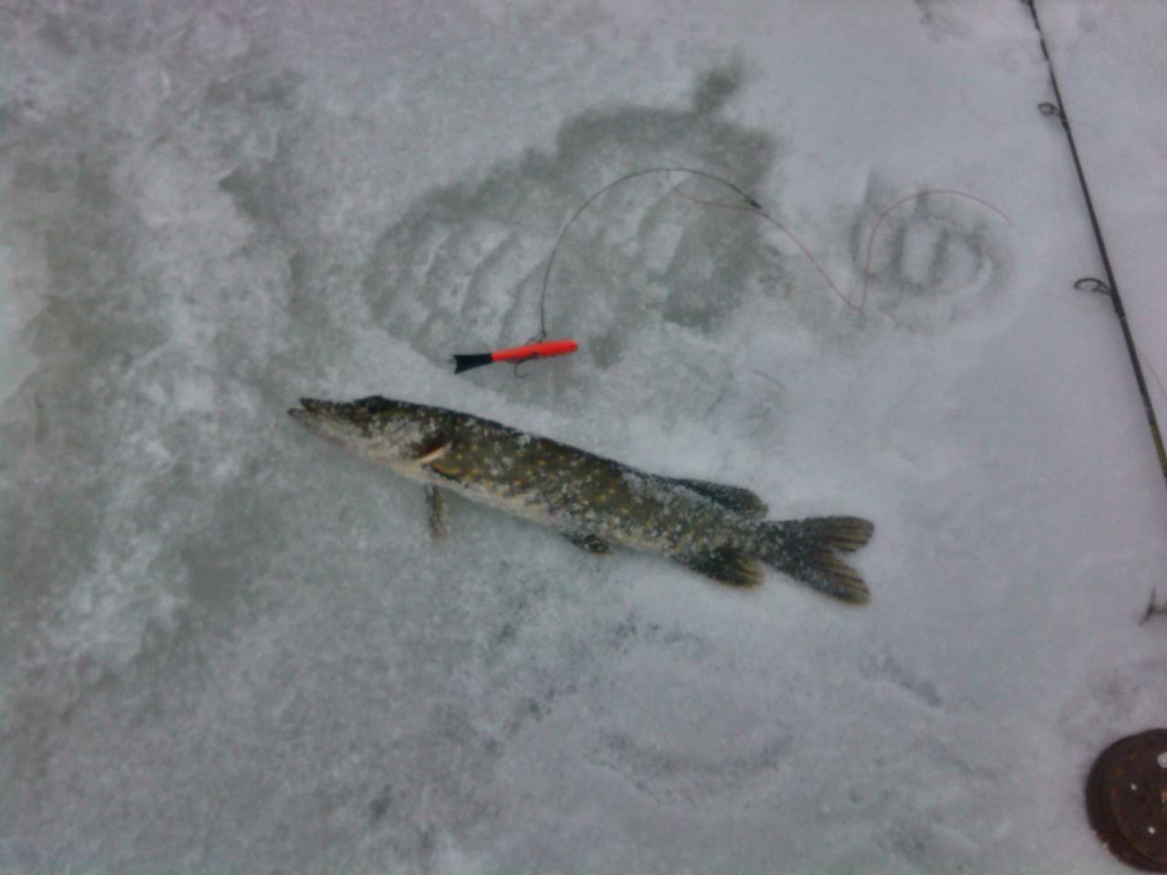 lola Может кто был на днях на льду ...   Отчеты о рыбалке в Беларуси