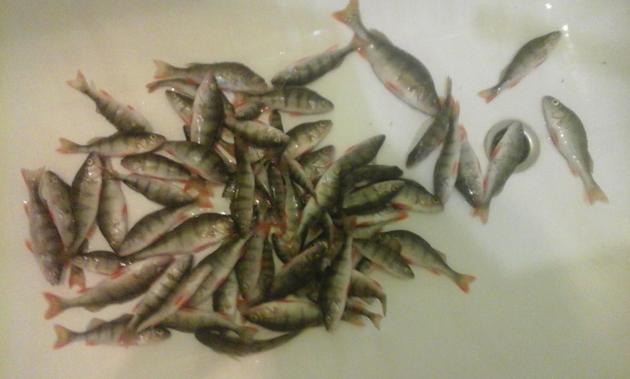 сегодня во3ле дома рыбака с 14.00 до 17.30 ...   Отчеты о рыбалке в Беларуси