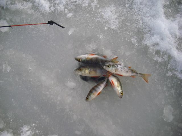 Вчера к 15 00 приехал на дачу, и лодку достать, и лед проверить