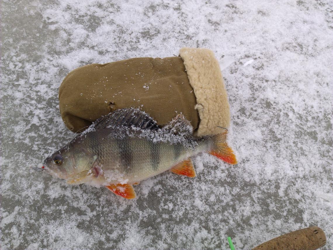 Был в разведке воскресенье-понедельник. Лёд есть рыба тоже