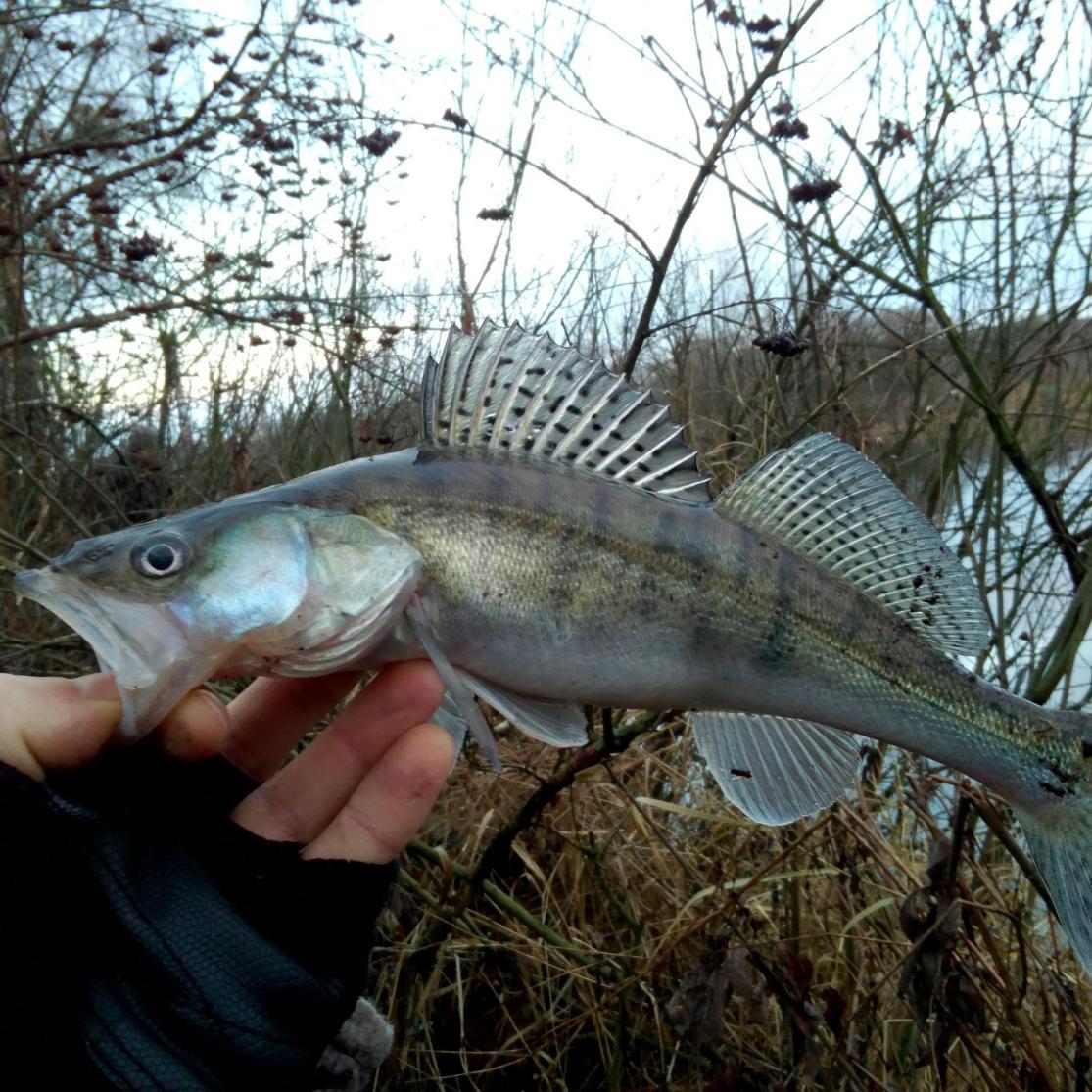 Отчет за два выходных дня,был в Белоозерске,холодный канал,микроджиг ...   Отчеты о рыбалке в Беларуси