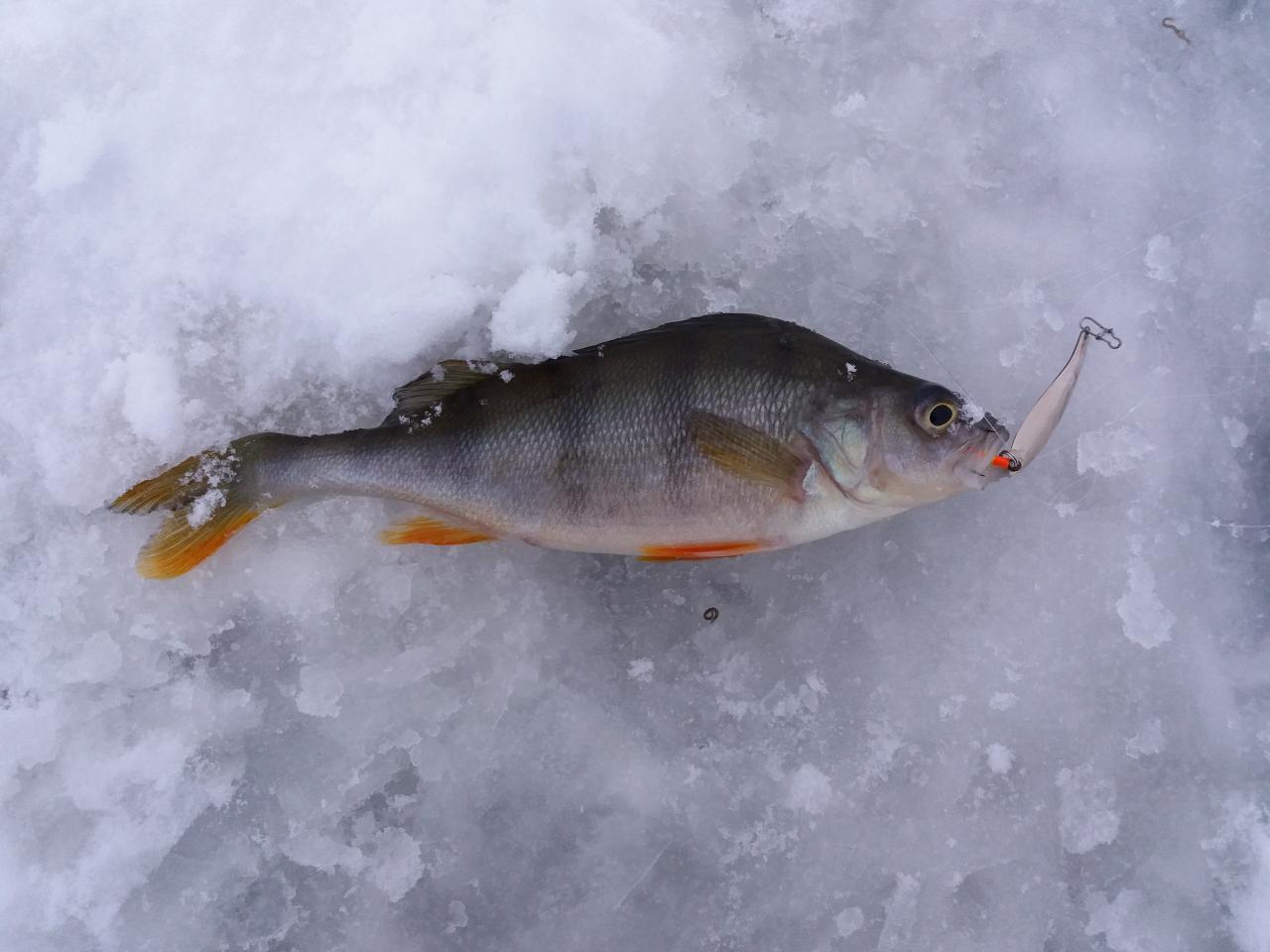 Всем доброго утра. Начнём кратенький отчётик за открытие ... | Отчеты о рыбалке в Беларуси
