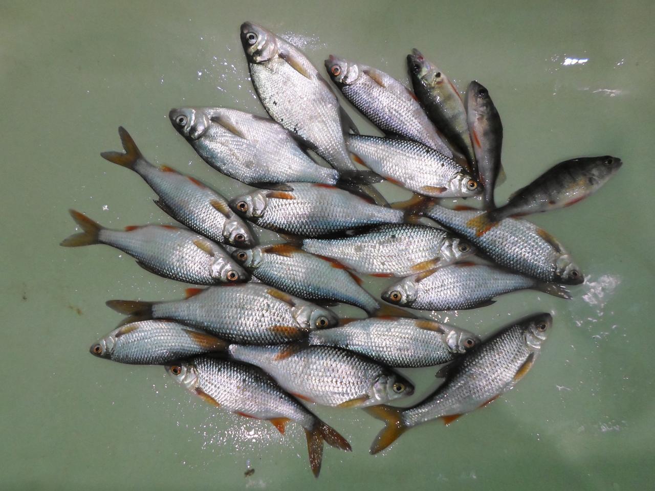 Сегодня были с рассвета с Паша 3 в ... | Отчеты о рыбалке в Беларуси