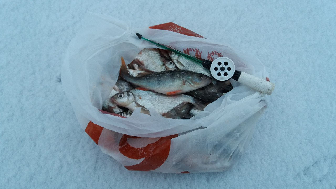 Сегодня Езерище не подвело! Трофеями не побаловало, но ... | Отчеты о рыбалке в Беларуси