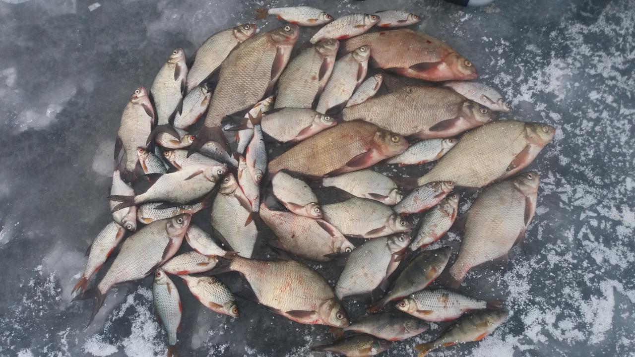 С обеда 2 по 11 утра 3 января ... | Отчеты о рыбалке в Беларуси