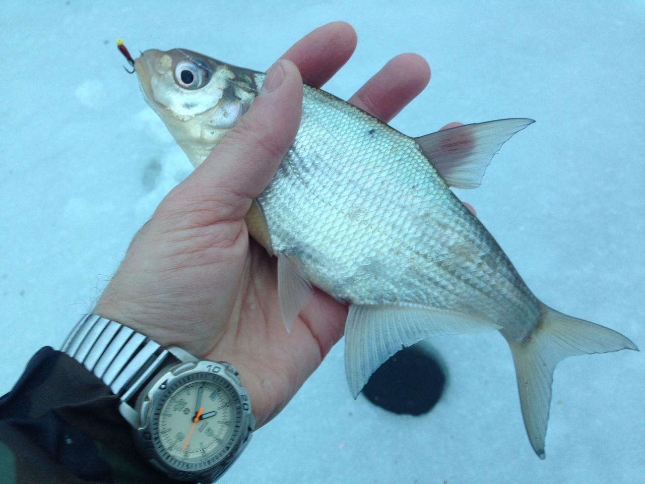 2 января 2017 г. д.Ходорово (понедельник): Часть 1 ... | Отчеты о рыбалке в Беларуси