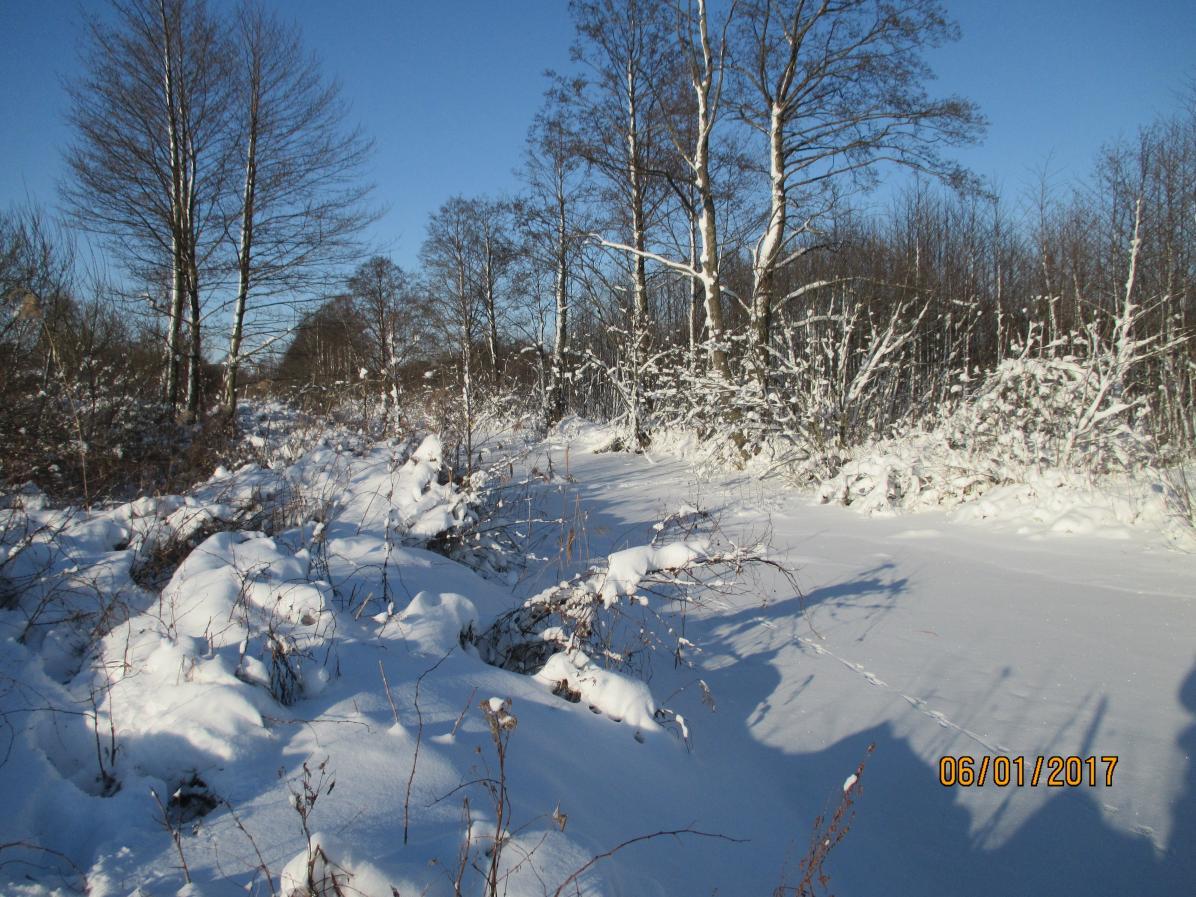 Мороз и солнце, день чудесный! В четверг обзвонил ... | Отчеты о рыбалке в Беларуси