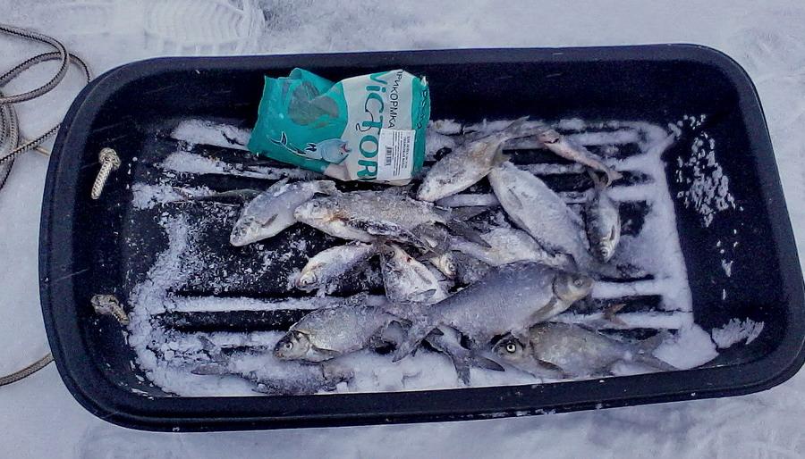 Большое Лосвидо от Мариамполя сегодня. До моих обычныхглубин ...   Отчеты о рыбалке в Беларуси
