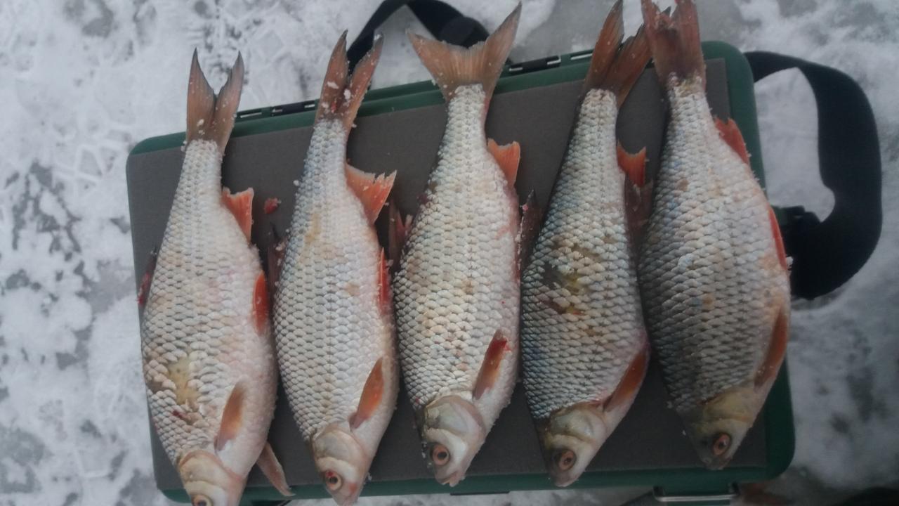 Был со среды 16:00 по четверг 15:00, нестерки,7м ... | Отчеты о рыбалке в Беларуси