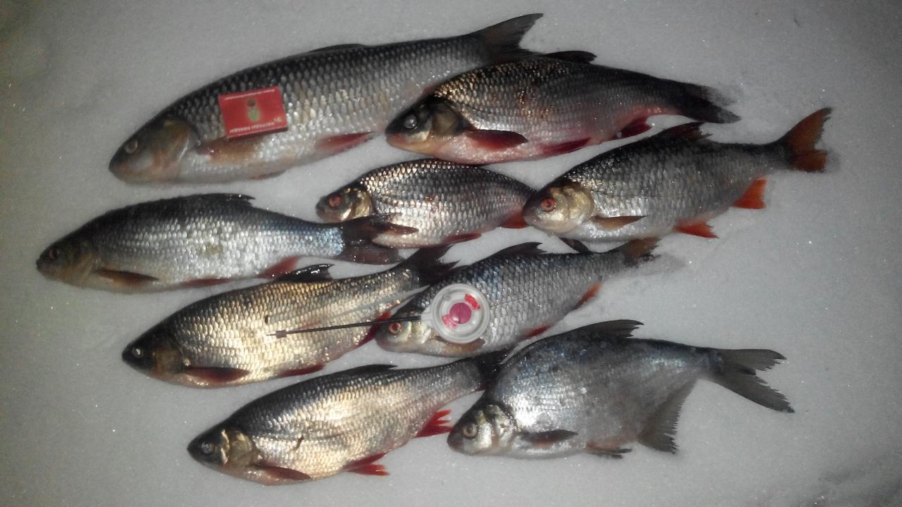 Давно не был,соскучился по реке...два коротеньких дня рыбалки-река ... | Отчеты о рыбалке в Беларуси