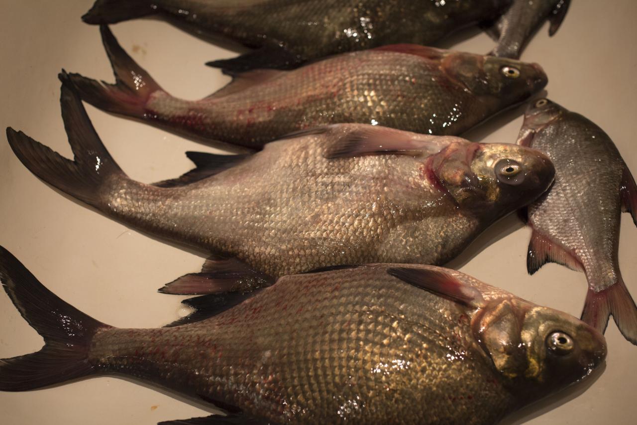dima-tutСегодня мой самый худший день на рыбалке. Ничего ... | Отчеты о рыбалке в Беларуси