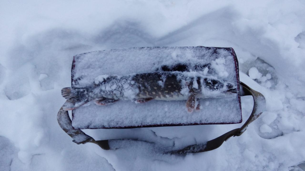Доброго времени суток всем! Давно обещал ребёнку на ... | Отчеты о рыбалке в Беларуси