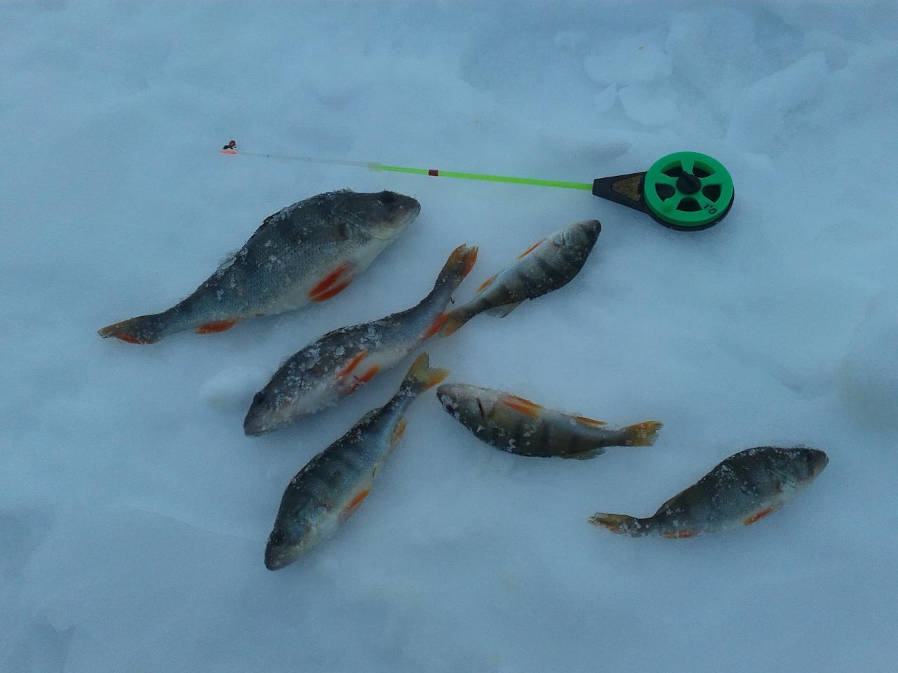 И снова я выбрался на лед вчера 23.как ... | Отчеты о рыбалке в Беларуси