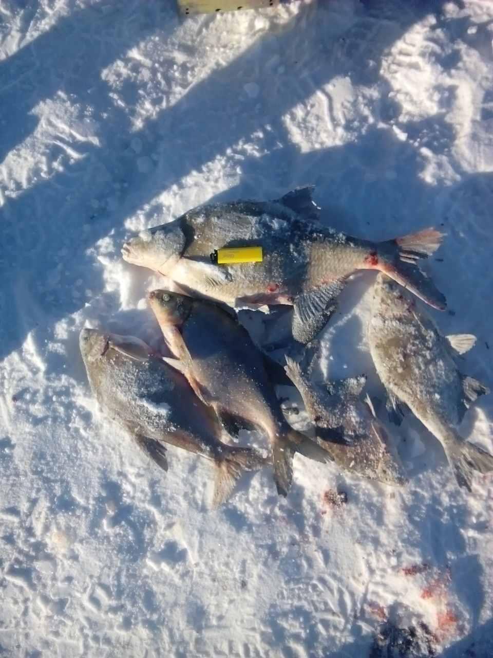 Наконец то повезло с погодой.. Приехали к шести ... | Отчеты о рыбалке в Беларуси