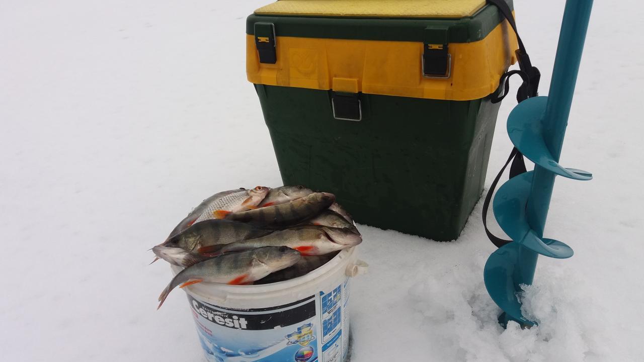 Решил сегодня разведать совершенно новое местечко. ..Нет,конечно,осенью приметил ... | Отчеты о рыбалке в Беларуси