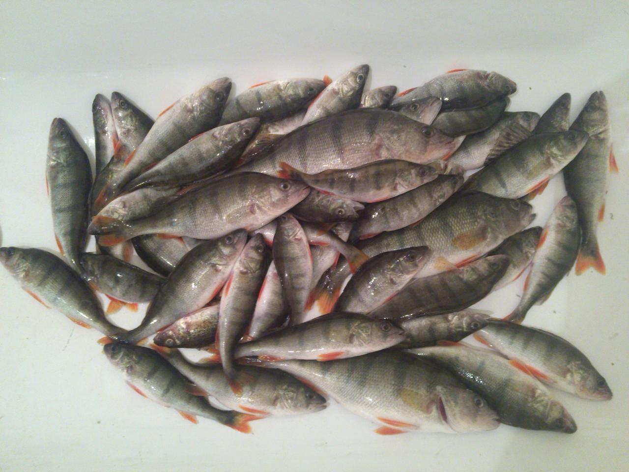 Счастье сегодня нашел только в час дня,на глубине ... | Отчеты о рыбалке в Беларуси