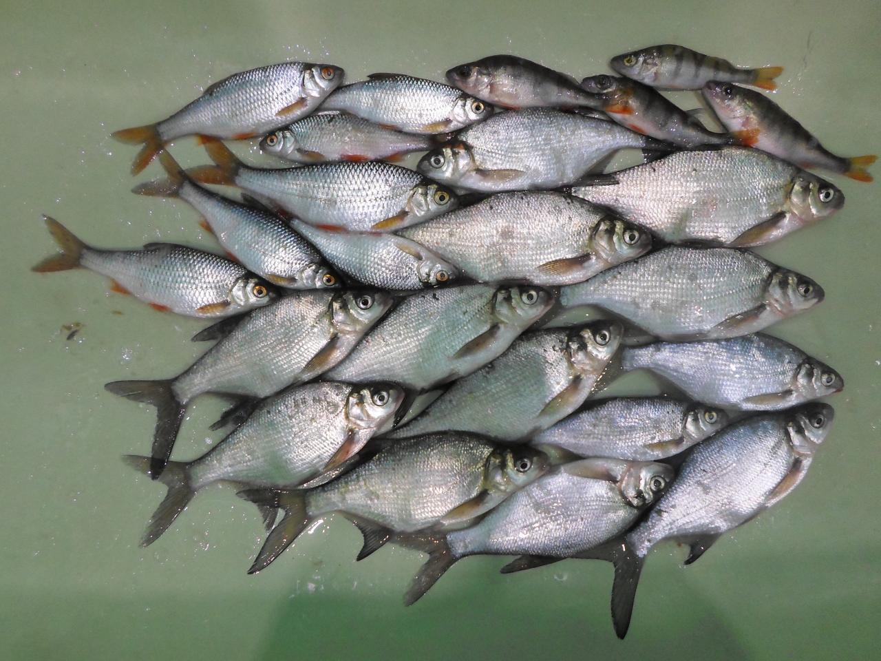 Сегодня ловил в том же месте где вчера ...   Отчеты о рыбалке в Беларуси