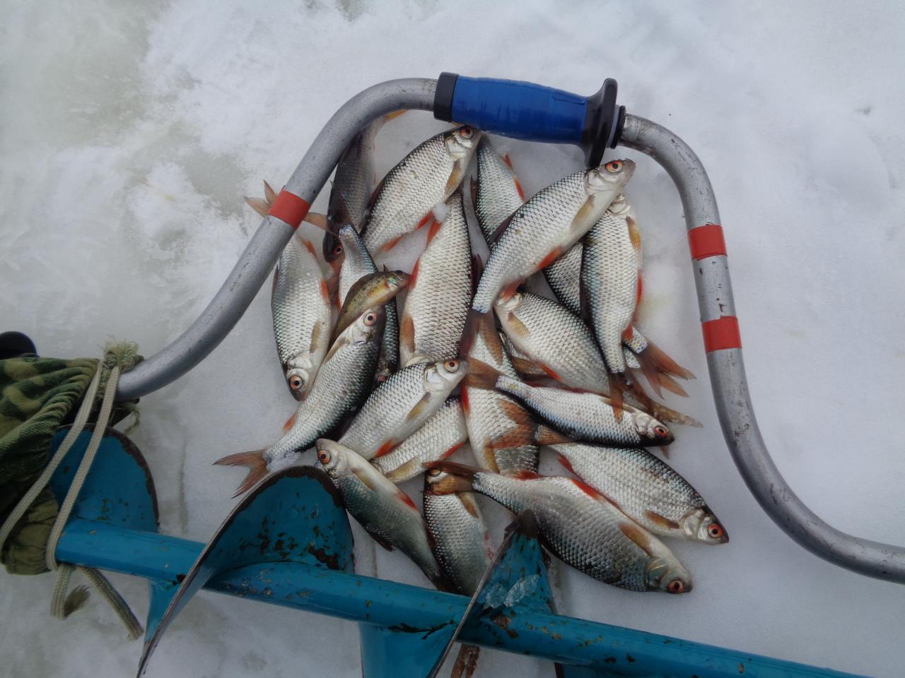 Сегоднярыбачил в районе пляжа с 10-00 до 16-00 ... | Отчеты о рыбалке в Беларуси