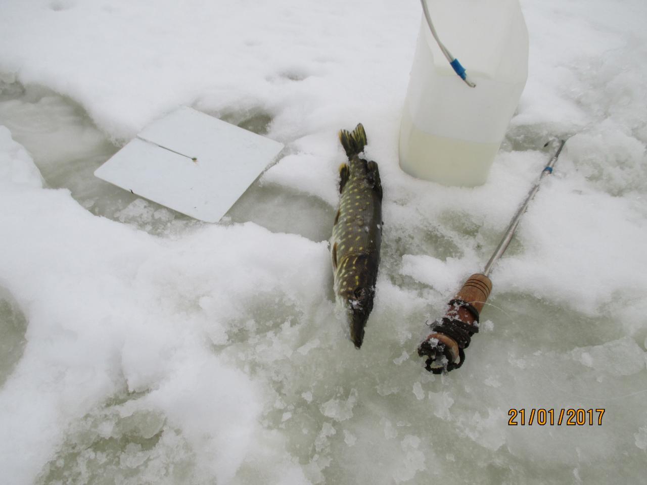 Только что вернулся с Сергеевских разливов. Разложил всё ... | Отчеты о рыбалке в Беларуси