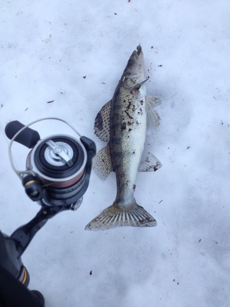 Топтали в субботу с Анпалычем дальний тёплый с ... | Отчеты о рыбалке в Беларуси