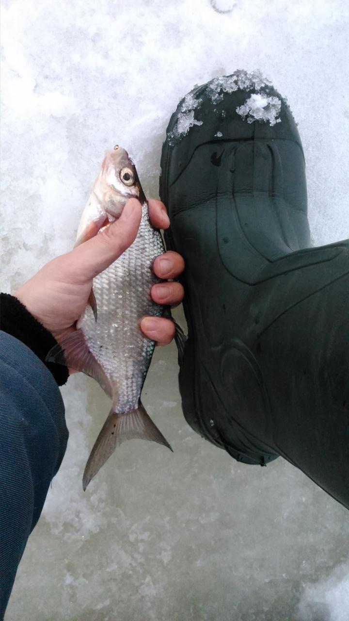 vital fish 84-84Что слышно на речке,был кто?Сегодня был ... | Отчеты о рыбалке в Беларуси