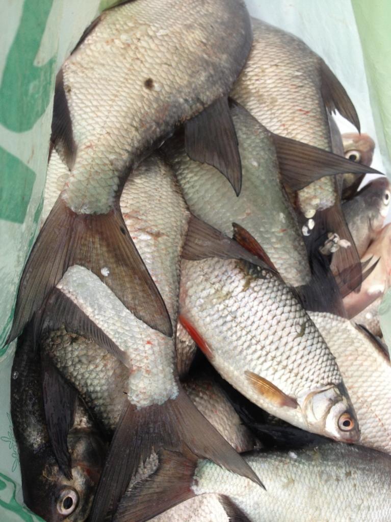 Воскресенье, 22.01.17Центр, клев с 10 до 14 стабильный ... | Отчеты о рыбалке в Беларуси
