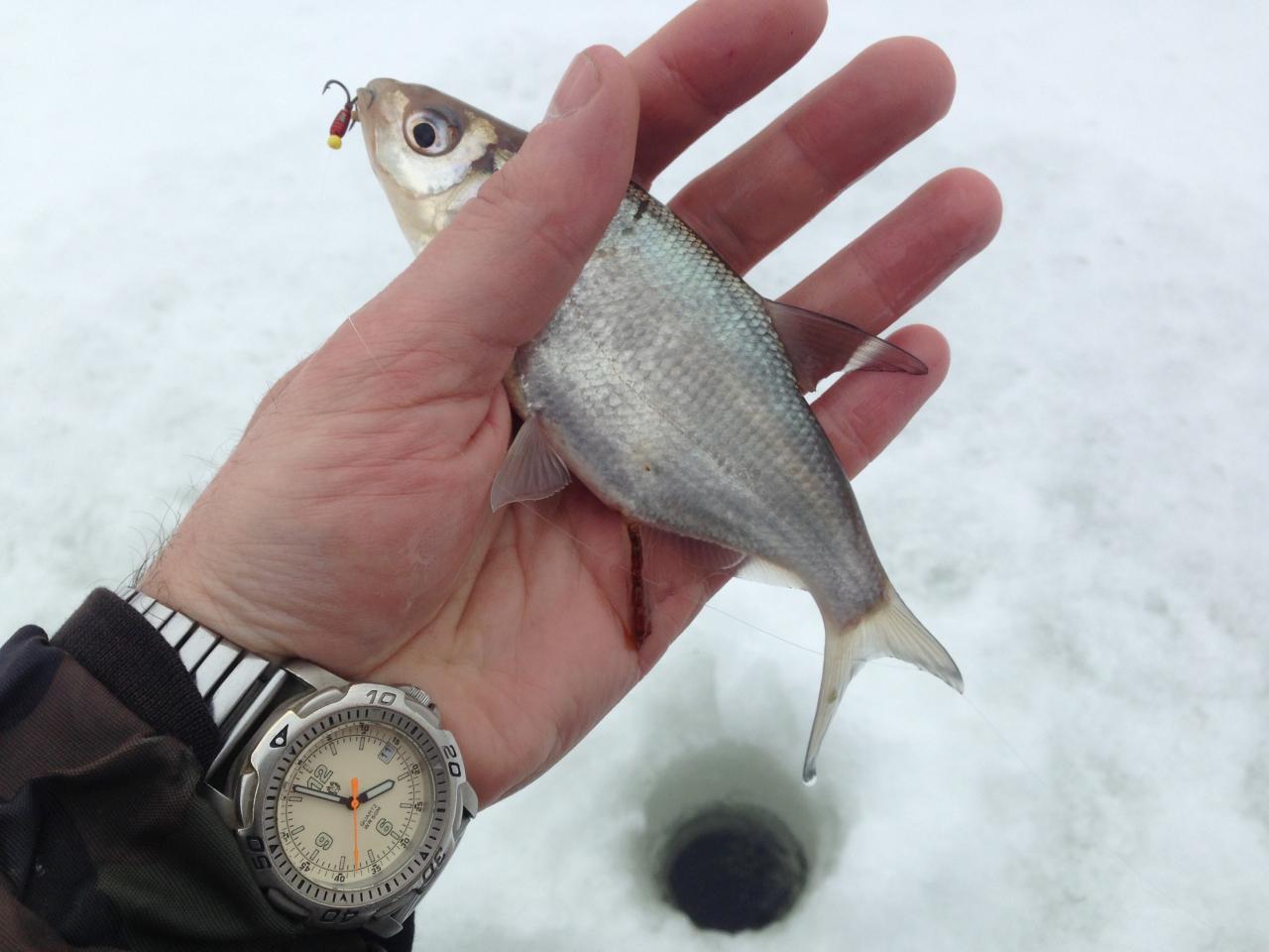 11 февраля 2017 г. (суббота) д.Ходорово : ...После ... | Отчеты о рыбалке в Беларуси