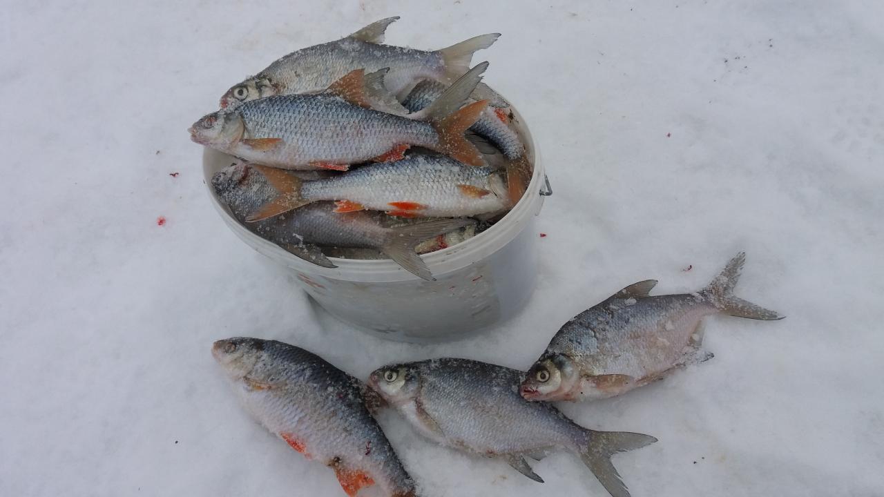 Докладываю..И в восточный ветер белая рыба берет...Только надо ... | Отчеты о рыбалке в Беларуси