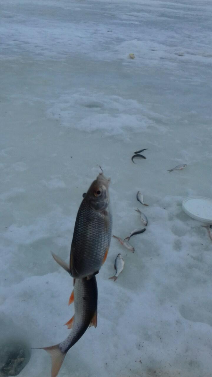 И я был в субботу 18 на Слободе ...   Отчеты о рыбалке в Беларуси